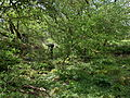 Sluice and mill site, Doggartland, Drakemyre, Ayrshire.JPG