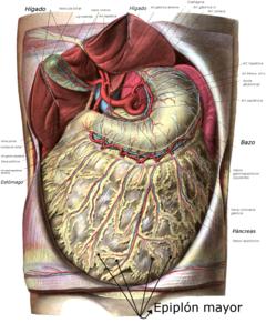 cancer de peritoneal tratament cu pilule de helmint
