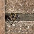 Spider (28244536889).jpg