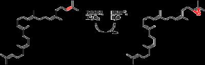 Squalene epoxide biosynthesis.png