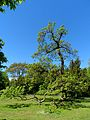 Stadtpark Baum.JPG