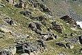 Stambecco in Valsavarenche.jpg