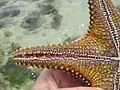 Starfish bottom side.JPG