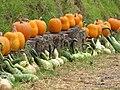 Starr-111004-0576-Cucurbita pepo-pumpkin and gourd display-Kula Country Farms-Maui (24491539463).jpg