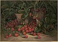 Strawberries by Boston Public Library.jpg