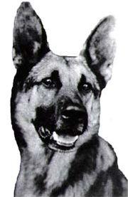 map of german shepherd dog the full wiki