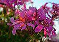 Sun-flecked flowers (7965456318).jpg