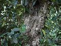 Sundarban Mangrove (5926680269).jpg