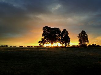 Royal Park, Melbourne - Sunset at Royal Park