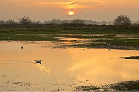 Sunset at the river Waal near Ochten - the Netherlands.jpg