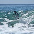 Surf IMG 9522-1 (3119179744).jpg
