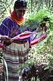 Susie Billie collecting medicinal plants- Big Cypress Seminole Indian Reservation, Florida (7830615766).jpg