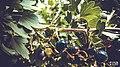 Svln svln4821 ordubad me best top photography resimleri sekilleri photos creative profil maraqli sekil resim fotograflari fotograf ornek resimler (328).JPG