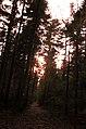 Swietokrzyski park narodowy.jpg