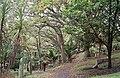 Symonds Street Cemetery Auckland 01.jpg