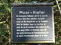 Tafel Hinterzartener Moor 1130122 Moor-Kiefer.jpg