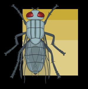 Tagma (biology) - Image: Tagma