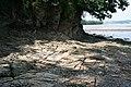Tamar shoreline - geograph.org.uk - 468866.jpg