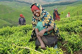 Economy of Rwanda - Tea field workers.