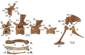 dating and naming of the fossils