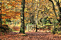 The Autumn walk (3019286515).jpg