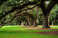 The Boone Hall Plantation- 200 year old trees.jpg