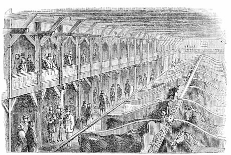 INTERIOR OF THE CATTLE-SHED.