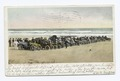 The Line Up, Autos on Beach, Daytona Beach, Fla (NYPL b12647398-68180).tiff