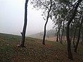 The Mountain mist.jpg