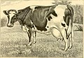The breeds of live stock, and the principles of heredity (1887) (14758400626).jpg