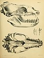 The zoology of the voyage of the H.M.S. Erebus and Terror (6258361712).jpg