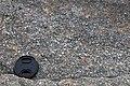 Thunderhead Sandstone (Neoproterozoic; Clingmans Dome, Great Smoky Mountains, North Carolina, USA) 9 (36618426800).jpg