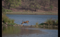 Tiger in Ranthambore 38.png