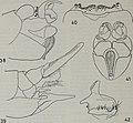Tijdschrift voor entomologie (1857) (14779286691).jpg