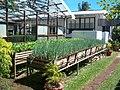 Tobago herb garden.jpg