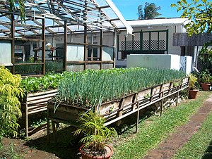 Herb garden at Kariwak Village in Tobago