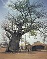 Togo-benin 1985-096 hg.jpg