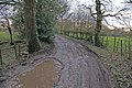 Track to Showley Hall - geograph.org.uk - 378519.jpg
