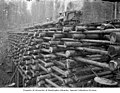 Train with flatcars loaded with logs on railroad trestle, ca 1903 (INDOCC 645).jpg