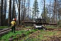Tree mortality Crews working in the Sierra National Forest (24056680057).jpg