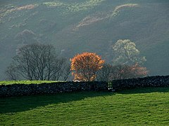 Trees in Autumn Sunshine at New Laithe. - geograph.org.uk - 273881.jpg