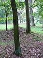 Trees near Libstejn.JPG