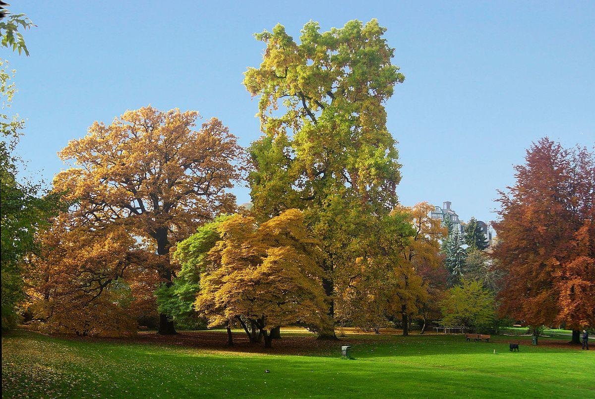 Tulpenbaum im Alten Botanischen Garten Marburg (Elop).jpg