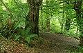 Two paths, Crawfordsburn Glen - geograph.org.uk - 937830.jpg