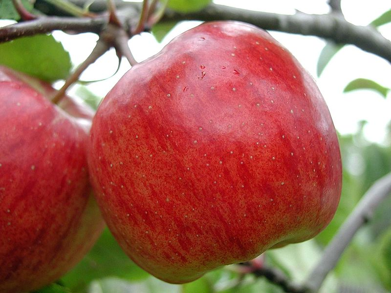 File:Two red apples.jpg