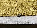 Unidentified-butterfly-20190610-144941.jpg