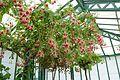 Unidentified - Laeken Royal Greenhouses - Royal Castle of Laeken - Brussels, Belgium - DSC07258.jpg