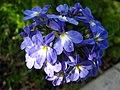 Unidentified flower in yard 2.jpg