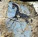 Urartian Fresco07.jpg