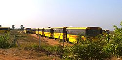 Line of yellow buses